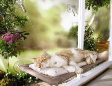 Cat Window Shelf – The Natural Way to Get Kitty Warm During Winter Time